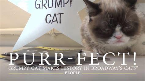 grumpy cat joins cats on grumpy cat joins cats on broadway