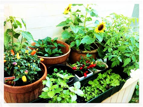 vegetable gardening in colorado flower vegetable gardening arapahoe county