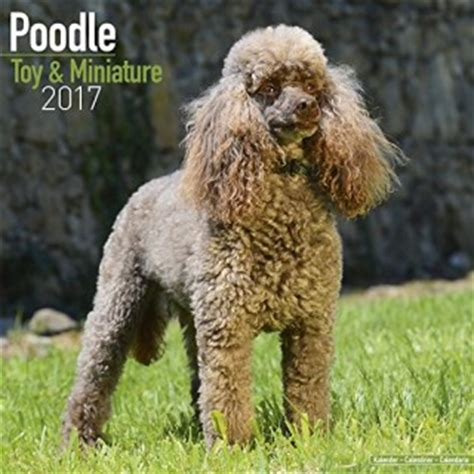 poodles mini wall calendar 2018 16 month calendar books 2017 poodle miniature calendars
