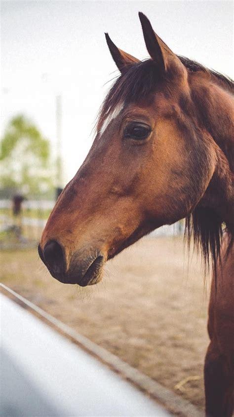 wallpapers hd fondos de pantalla de caballos varias chevaux fonds d 233 cran applications android sur google play