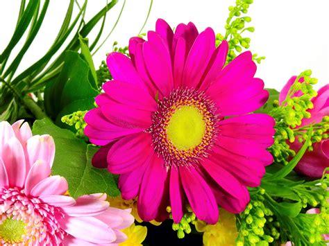 gambar wallpaper bunga segar gudang wallpaper