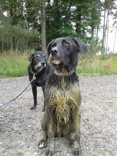 muddy puppy top tips for dealing with muddy dogs the