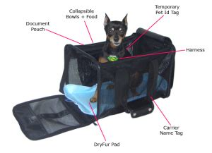 in cabin pet travel pet in cabin airline checklist and tips dryfur 174
