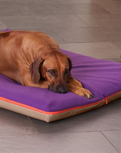 dog bed with cover memory foam dog bed cover dog beds gallery images and