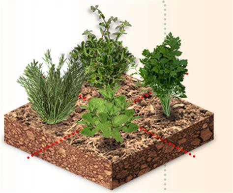 piante aromatiche da giardino aiuole da giardino cool cordolo da giardino colore verde