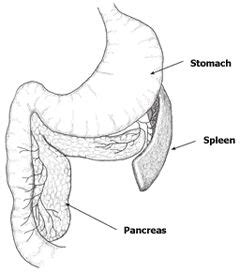 yorkie pancreatitis symptoms 61 best cats and dogs pancreatitis images on canine pancreatitis doggies
