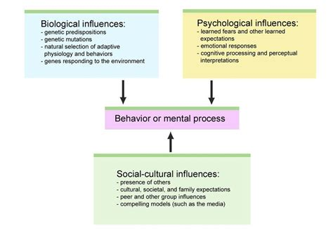 Social Model Detox And Mainecare by Prologue The Story Of Psychology Psychology 7a With