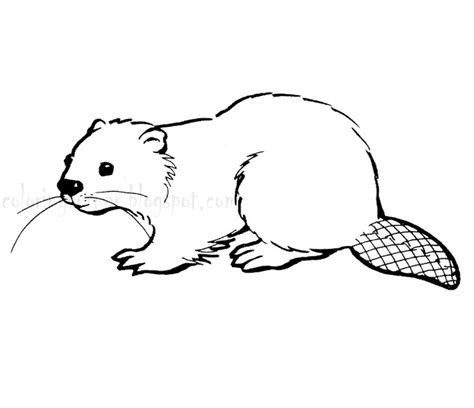 Beaver Coloring Pages Preschool | beaver coloring pages