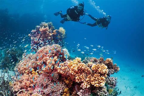 best place to dive the great barrier reef get your padi diving certification on the great barrier reef
