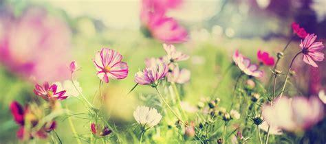 Succulent Planters by Garden Centre Ontario Online Ego S Garden Online
