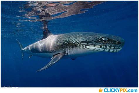 baby shark mix shark hybrid animals 20 shark combo pictures that s
