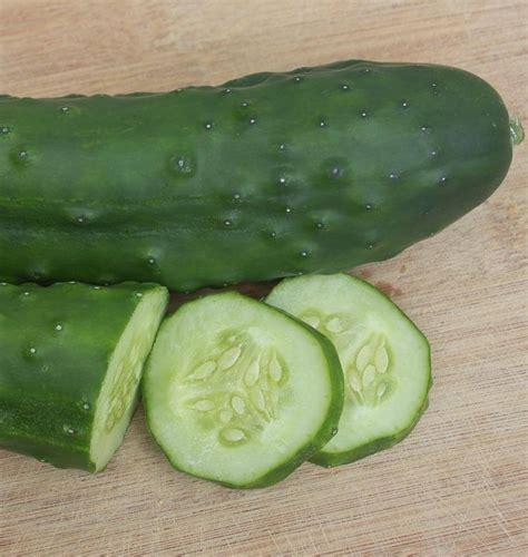 cucumber seeds olympian cucumber seeds
