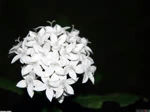 small white flowers wallpaper 20360 open walls