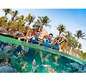 Xel Ha Tour  Your Complete Guide To Activities &amp Prices
