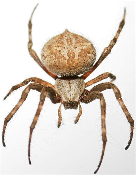 House Spider Seattle by How To Get Rid Of Spiders On House Bed Bugs Termites