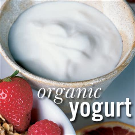 pembuatan yoghurt kental optimalisasi peran lactobacillus bulgaricus dalam proses