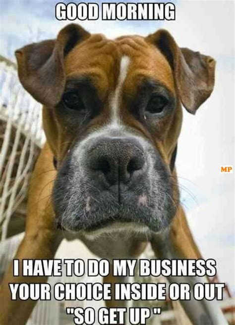 Boxer Dog Meme - 21 funny good morning memes to start off your day