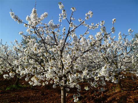 giardino ciliegi l azienda agricola il giardino dei ciliegi b b
