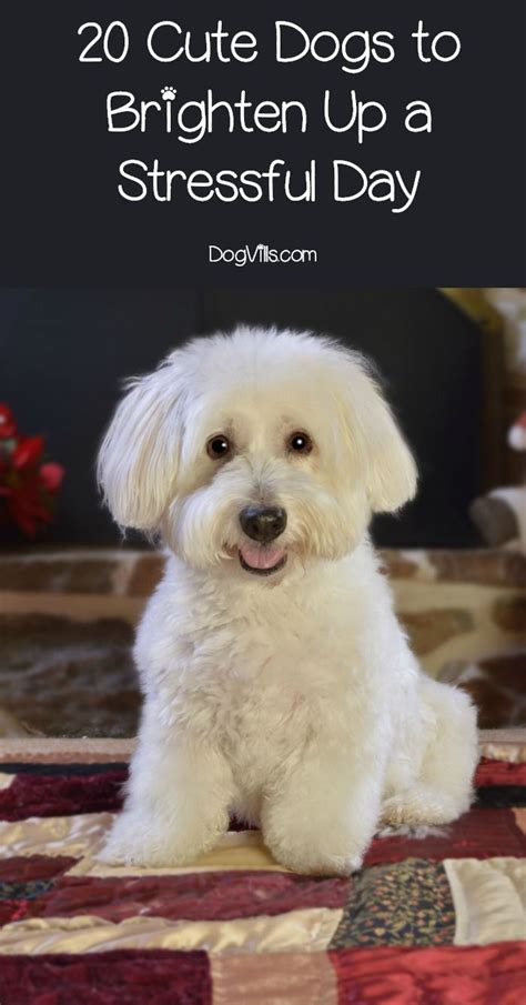 cute dog pictures ideas  pinterest funny dog