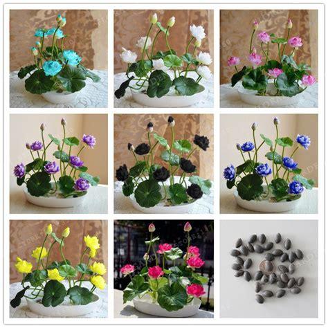 piante acquatiche in vaso acquista all ingrosso vasi di piante acquatiche da