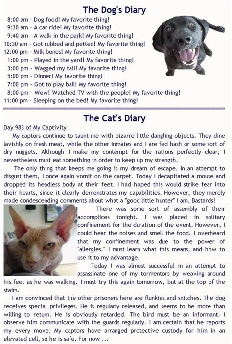 and cat diary get 20 cat diary ideas on without signing up cats 2015 cat vs