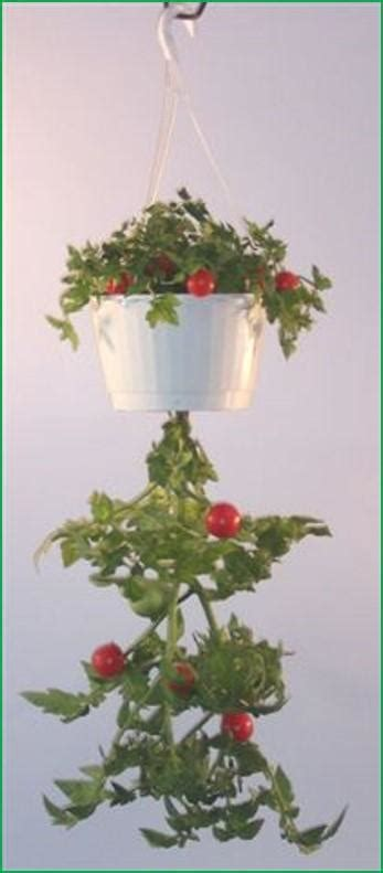 upsy downsy hanging vegetable gardens  triumph plant