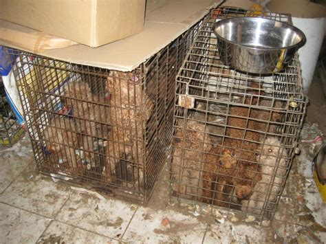 backyard breeder laws puppy farming