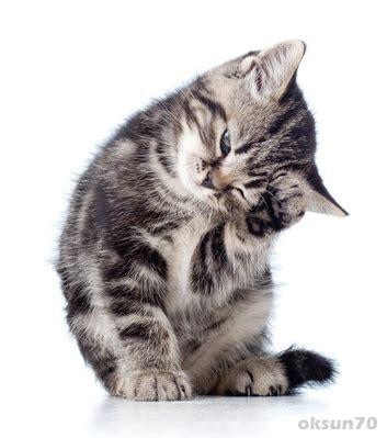 wie weit gehen katzen zuhause weg teddy s homepage