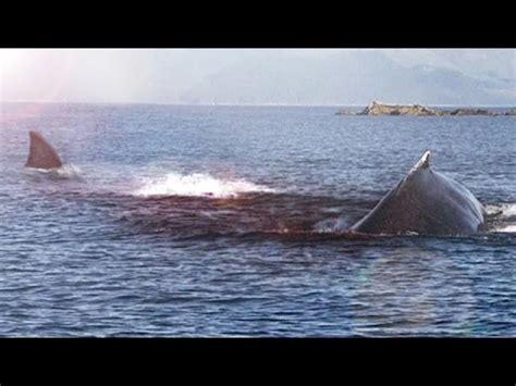 imagenes reales de un megalodon megalodon pruebas de que aun vive youtube