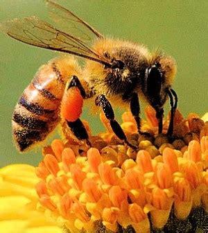 fiori e api nuovi progetti per salvare le api e i fiori in valle di