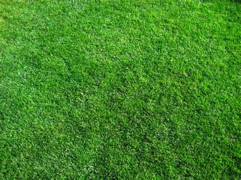 Summer Bed Sheets by How To Spread Grass Seed Garden Guides