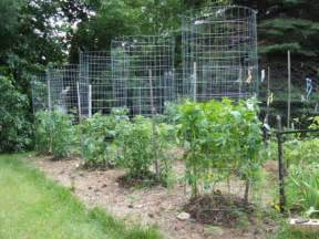 Tuteur Trellis Green Zebra Market Garden Make Your Own Sturdy Tomato Cages