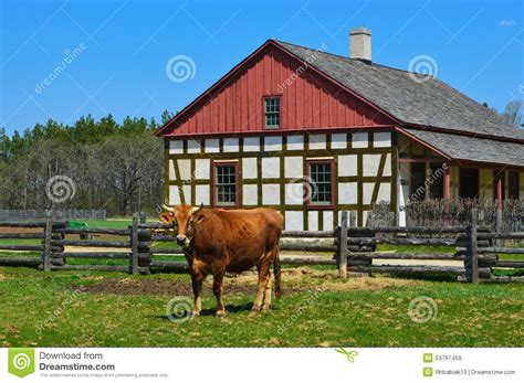 big tree cattle ranch large front house dpi home cow royalty free stock photography cartoondealer com