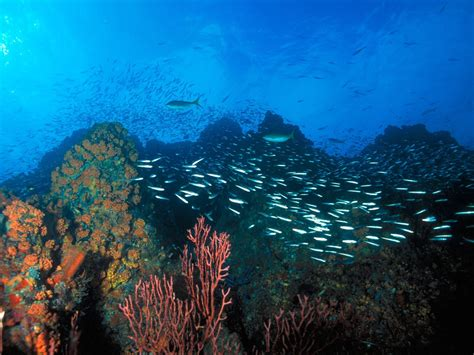 free wallpaper under the sea under the sea los roques reef fishes in free swim the