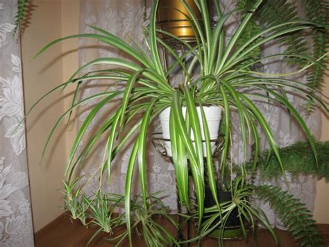 plants that can survive without light 9 best low light houseplants that are easy to grow