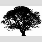 Family Tree Roots Background | 600 x 436 png 61kB