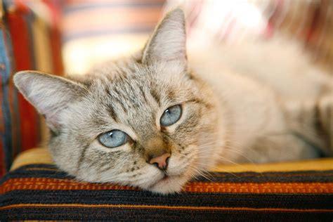 cost to euthanize a cost to euthanize a cat 2018 cats