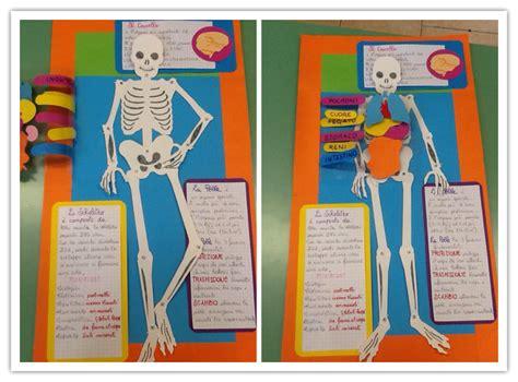 schema organi interni corpo umano scheletro realizzato con i bambini della classe 5