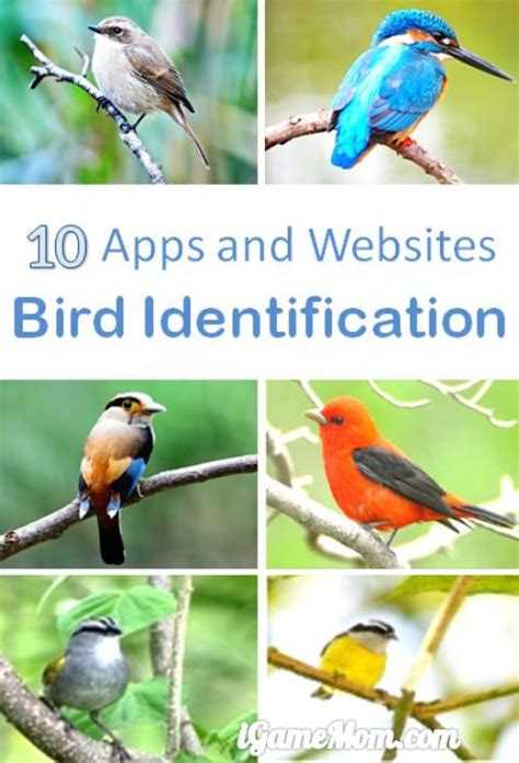 10 apps for bird identification nature study