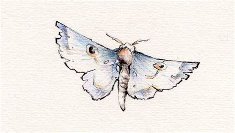 moth tattoo by festering08 on deviantart