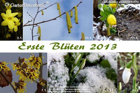 Garten Im Januar by Garten Im Januar Was Bl 252 Ht Im Januar Bilder Praxis Tipps