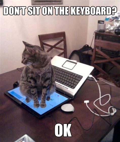 Cat Laptop Meme - cats hate laptops
