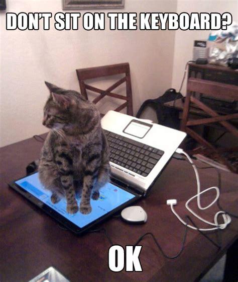 Laptop Meme - cats hate laptops