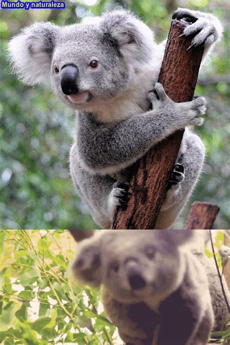imagenes gif naturaleza fotos de naturaleza animales paisajes animadas y