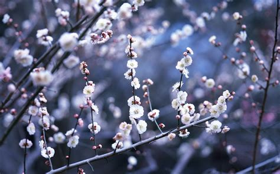 winter flowers winter flower 25805 1280x800 px hdwallsource com