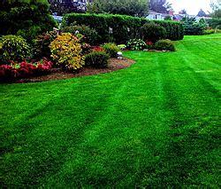 all american landscaping landscape maintenance lawn maintenance newport kingstown ri