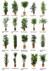 Houseplants That Don T Need Sunlight office plants common office plants 2 jpg plants