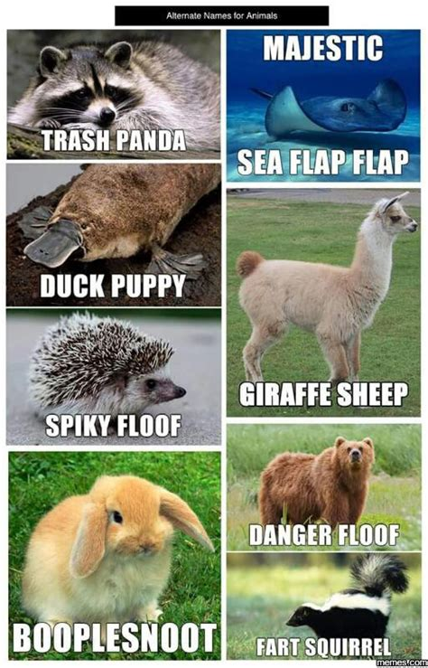 Anteater Meme Generator - alternate names for animals memes com