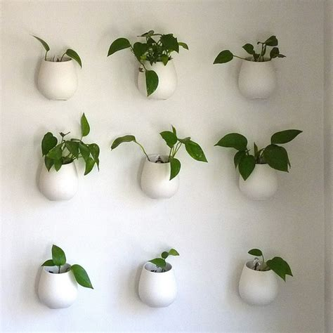indoor vine plant indoor hanging plants archives newpro