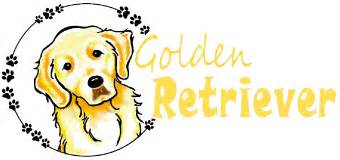 golden retriever how to take care of them if something happens to me who will take care of them official golden retriever